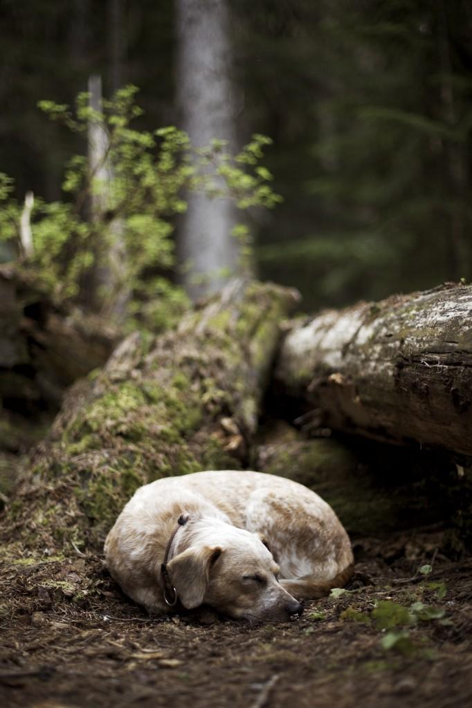 Lina dog in natural habitat
