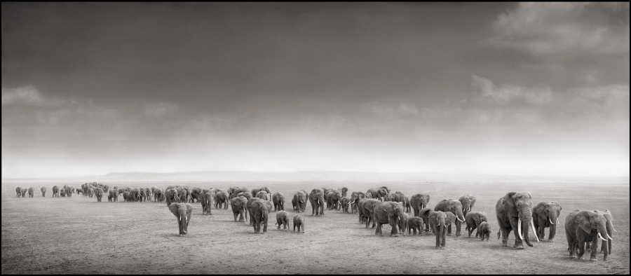 Elephant Exodus, Amboseli, 2004 by Nick Brandt